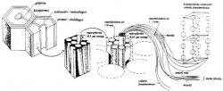 A fák mikroszkopikus felépítése