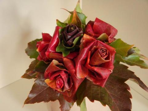 Vadszőlőlevél rózsa