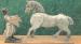 kaszas-gergo-a-fajatekgyartas-tortenete-18-cikk